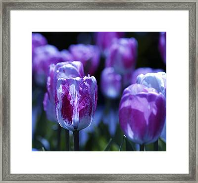 Framed Print featuring the photograph Peppermint Candies by Joe Schofield