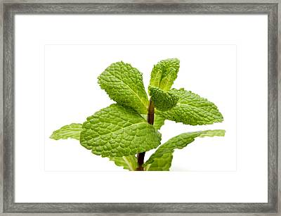 Peppermint Framed Print by Fabrizio Troiani
