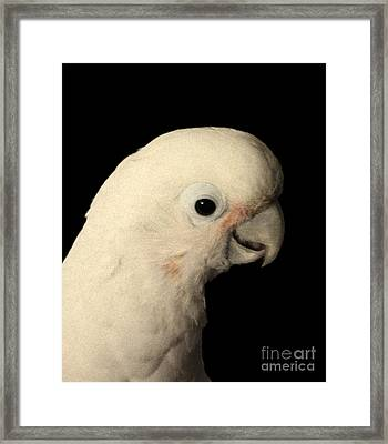 Framed Print featuring the photograph Peppermint by Megan Dirsa-DuBois