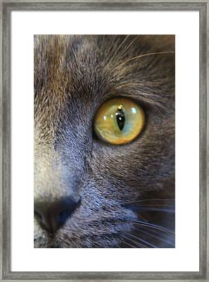 Pepper's Eye Framed Print