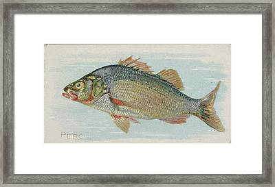 Perch, From The Fish From American Framed Print