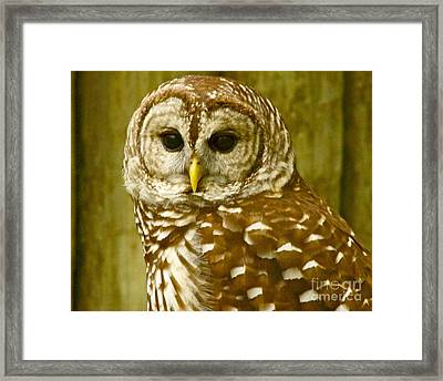 Framed Print featuring the photograph Perched by Alice Mainville