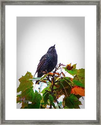 Perched Aloft Framed Print by Glenn Feron