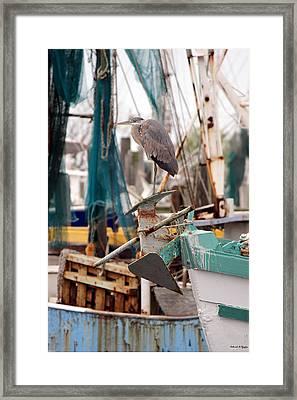 Perched Framed Print by Deborah Hughes