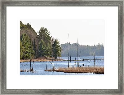 Perched Eagle Framed Print