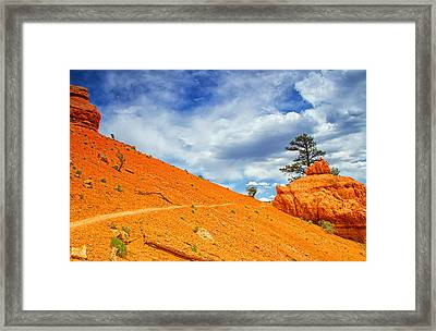 Perched Gently Framed Print