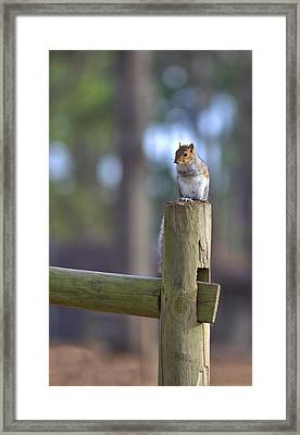 Perched Framed Print by Gordon Elwell
