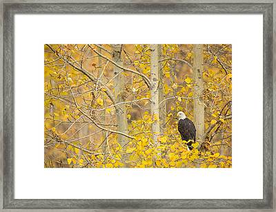Perched In The Colors Of Autumn Framed Print