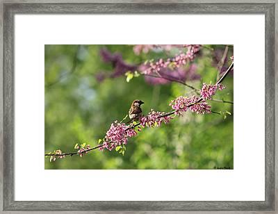 Perched Framed Print by Jackie Novak