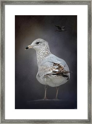 Perched Nearby Framed Print by Jai Johnson