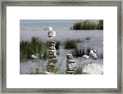 Perched On A Rock Cairn Framed Print
