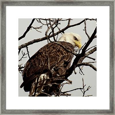 Perched On High Framed Print by Thomas Young