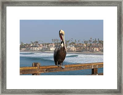 Perched On The Pier Framed Print