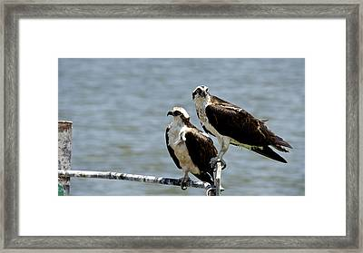 Perched On The River Framed Print by Kathi Isserman