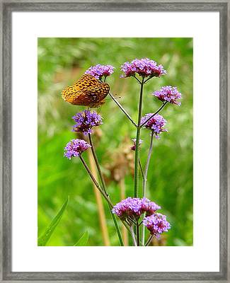 Perched Framed Print by Rodney Lee Williams