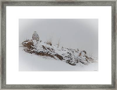 Perched Snow Owl Framed Print