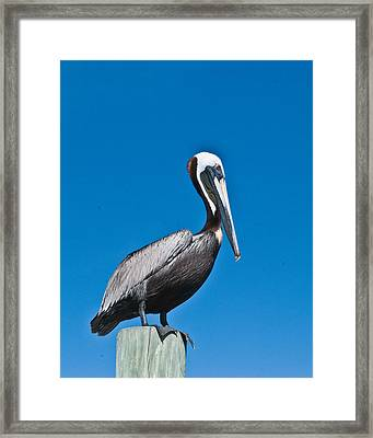 Perched Wil 391 Framed Print