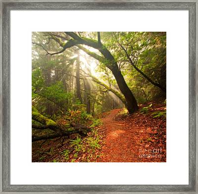 Percolating Sunrise - Thornewood Open Space At Dawn Framed Print