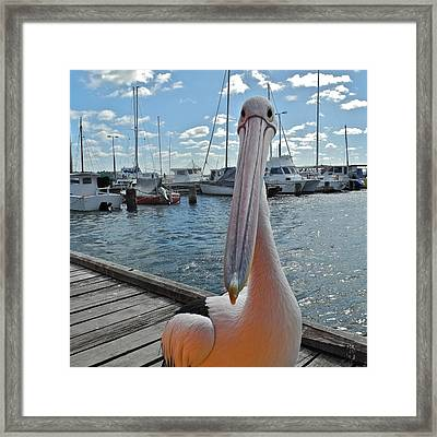 Percy The Pelican Framed Print by Kirsten Giving