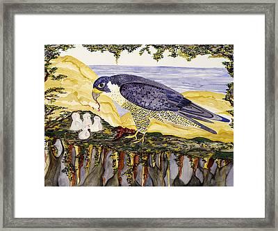 Peregrine Falcon Feeding Chicks Framed Print by Alexandra  Sanders