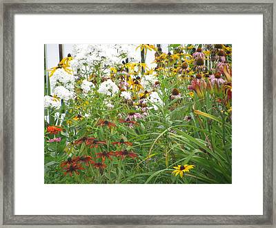 Framed Print featuring the photograph Perennial Garden 3 by Margaret Newcomb