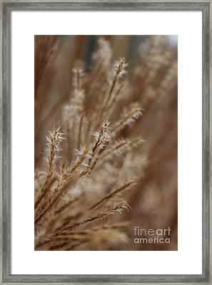 Perennial Grass Framed Print by Arlene Carmel