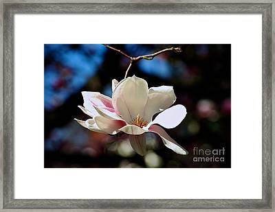 Perfect Bloom Magnolia Framed Print