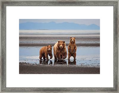 Perfect Brownies Framed Print by June Jacobsen