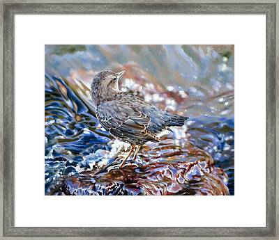 Perfect Camouflage  Framed Print by Dianna Ponting