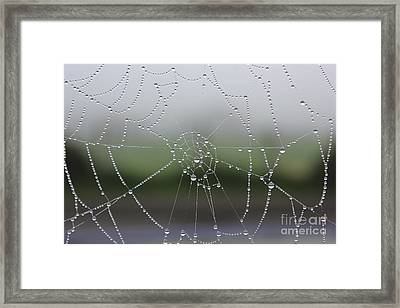 Framed Print featuring the photograph Perfect Circles by Vicki Spindler