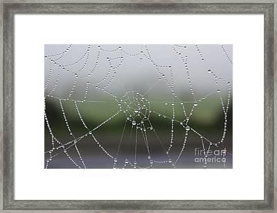 Perfect Circles Framed Print by Vicki Spindler