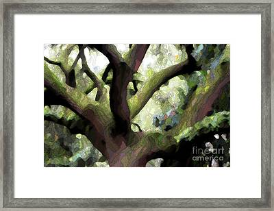 Perfect Climbing Tree  Framed Print by Carol Groenen