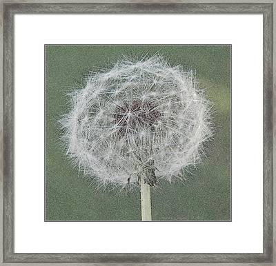 Perfect Dandelion Framed Print