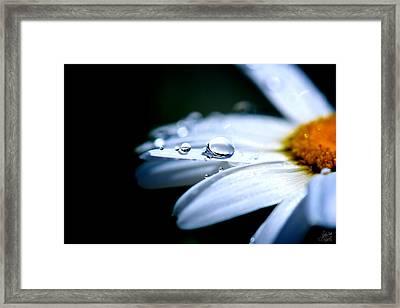 Perfect Drop Framed Print by Lisa Knechtel