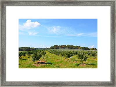 Perfect Fall Day On Alstede Farm Framed Print