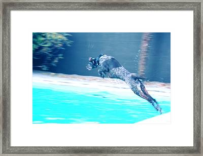Perfect Form Of A Rocket Dog Framed Print by Carolina Liechtenstein