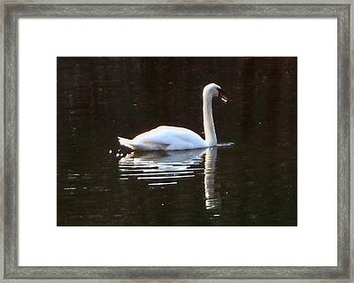 Framed Print featuring the photograph Perfect Grace by Judith Morris