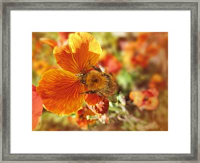 Framed Print featuring the photograph Perfect Harmony by Valerie Anne Kelly