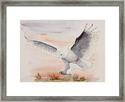 Perfect Landing Framed Print by Joette Snyder