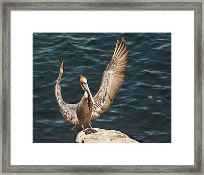 Perfect Landing Framed Print