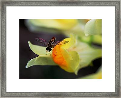 Perfect Landing Framed Print by Lisa Vaccaro