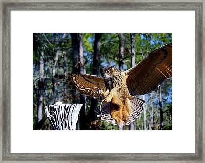 Perfect Landing Framed Print by Paulette Thomas