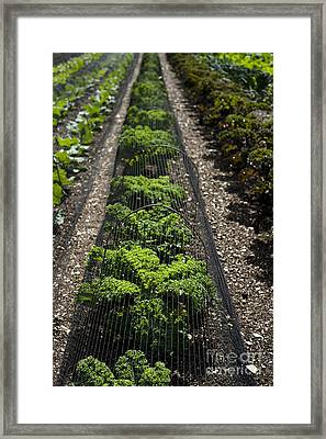 Perfect Lines Framed Print by Anne Gilbert