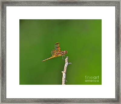 Perfect Painted Framed Print by Al Powell Photography USA