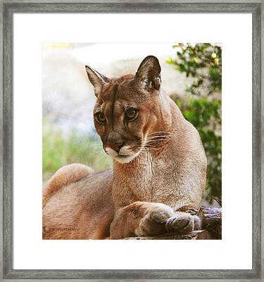 Perfect Panther Framed Print by DiDi Higginbotham