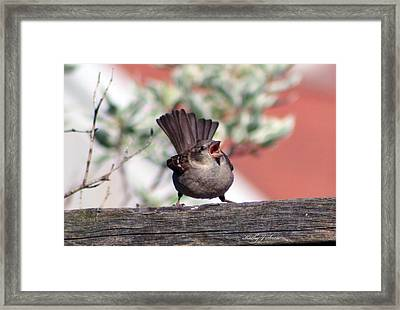 Perfect Pitch And Poise Framed Print by Kathy J Snow
