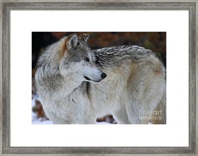 Perfect Pose Framed Print by Adam Jewell