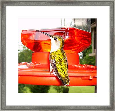 Framed Print featuring the photograph Perfect Pose by Nick Kirby