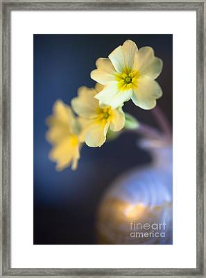 Perfect Primrose Framed Print