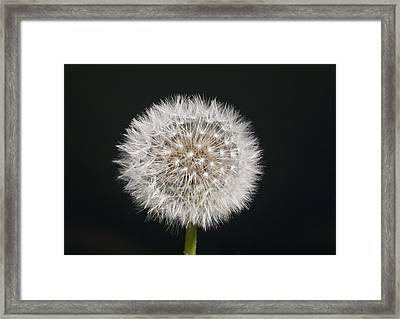 Perfect Puffball Framed Print
